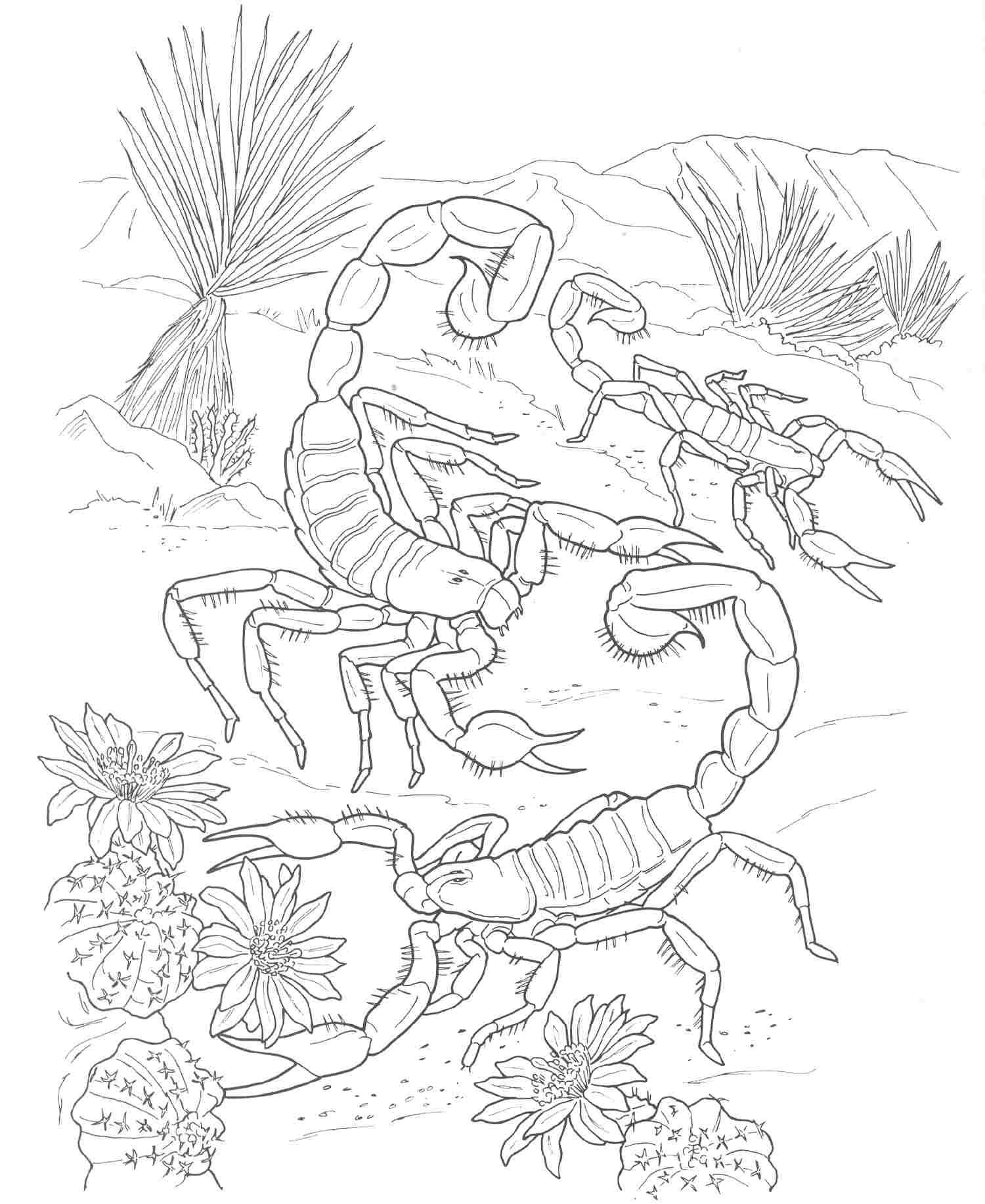 Free Coloring Pages Of Desert Animals Desert Animals Coloring Pages